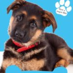 9781509853649A Dog-s Purpose Ellie-s Story-1200x0x0